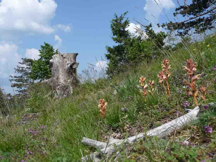 Sommer-Wild-Pflanzen